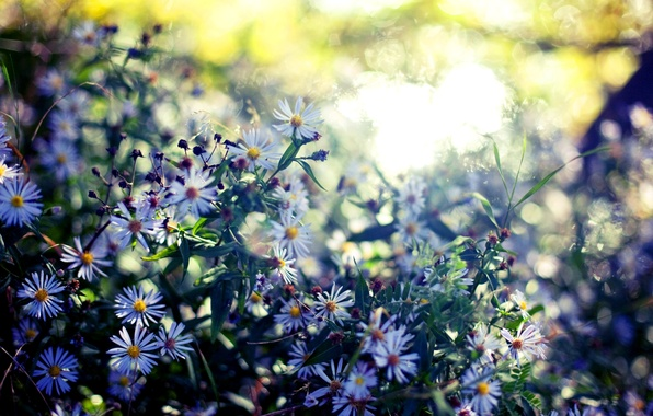 Картинка лето, листья, цвета, цветы, природа, фон, обои, растения, размытость, цветение, боке