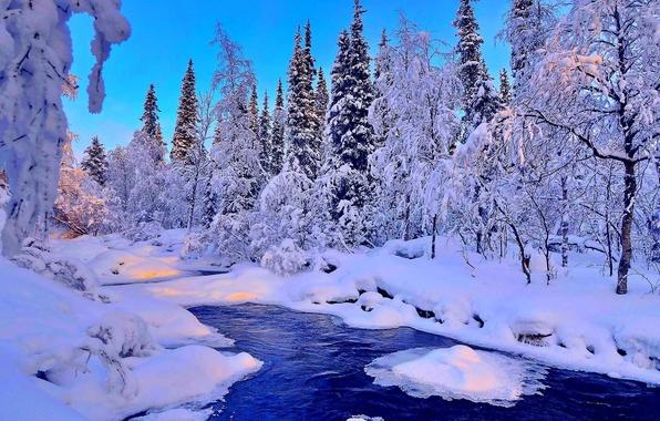 Картинка зима, лес, снег, деревья, пейзаж, река, ель