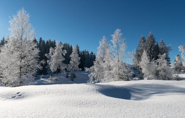 Картинка зима, иней, лес, снег, деревья, синее небо