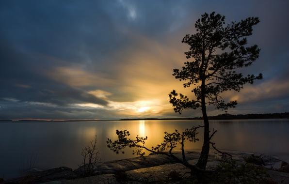 Картинка пейзаж, ночь, озеро, дерево