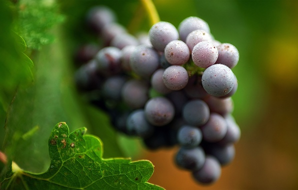 Фото обои виноград, листья