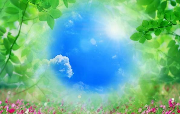 Картинка небо, трава, листья, цветы, природа, яркое
