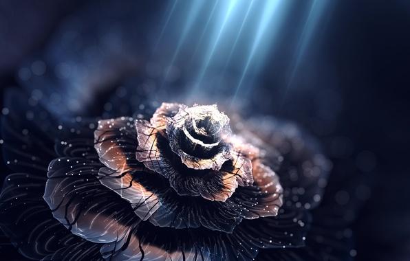 Картинка цветок, свет, лепестки, illumine