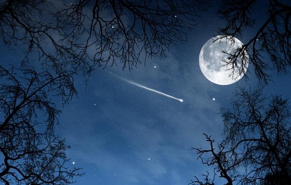 Картинка деревья, пейзаж, ночь, природа, луна, звёзды, месяц, moon, sky, trees, night, luna, view stars
