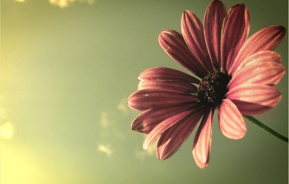 Картинка цветок, небо, макро, лучи, свет, растение, лепестки, flower, colours