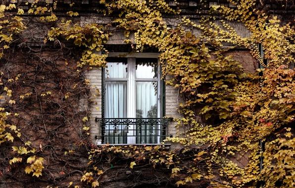 Картинка осень, Париж, Окно, плющ