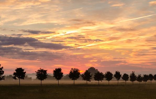 Картинка небо, деревья, природа, туман, ряд