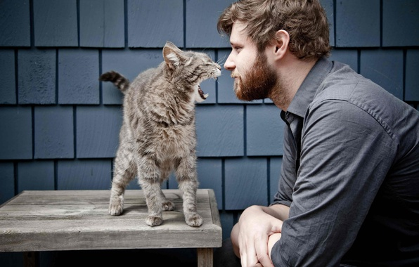Картинка кошки, мужчина, вой, парень, дикие, man, смешно, funny, guy, Howl, bossy cat, шишковатый, wild