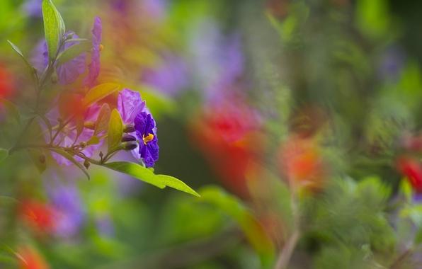 Картинка листья, цветы, ветка, синие, боке