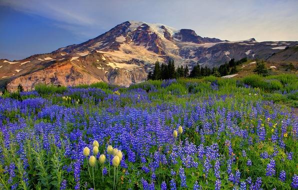 Картинка небо, облака, снег, деревья, цветы, горы, природа, луг