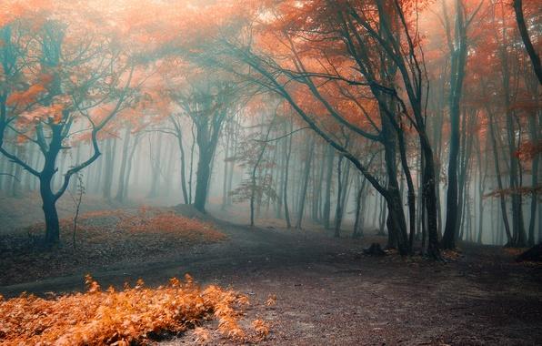 Картинка осень, лес, листья, деревья, ветки, природа, туман, оранжевые, тропинки