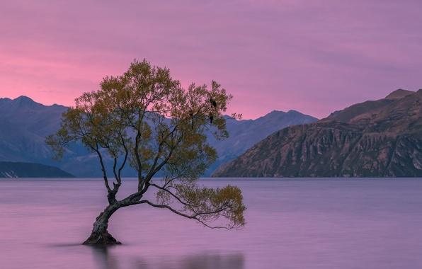 Обои горы, дерево, Новая Зеландия, New Zealand, mountains ...