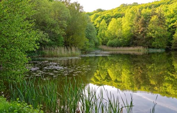 Картинка зелень, лето, трава, вода, деревья, отражение, река, камыши, берег, кусты