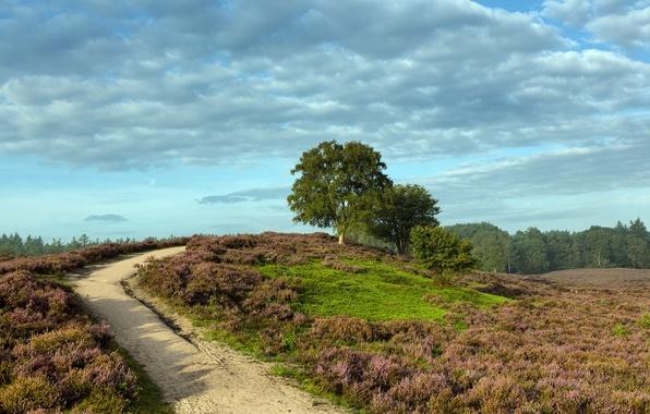 Картинка дорога, поле, лето, пейзаж, природа
