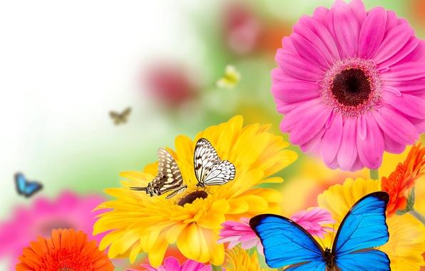 Картинка бабочки, цветы, весна, colorful, flowers, spring, bright, butterflies, gerbera