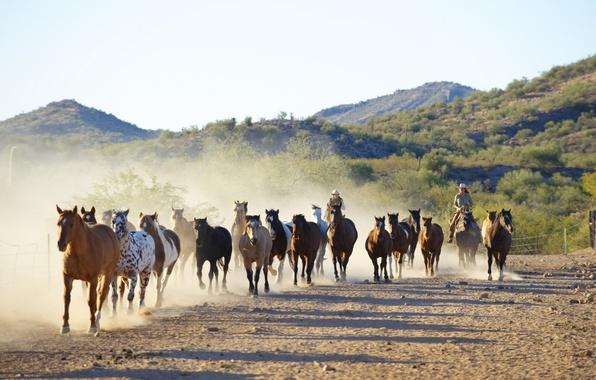 Картинка природа, кони, бег, ковбои, загон, табун, Canon 60D, кораль, погонщики