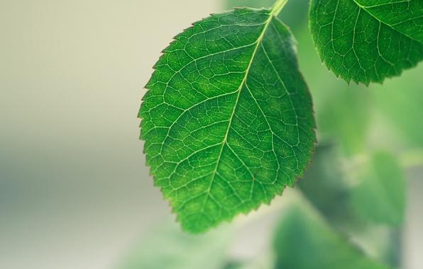 Картинка макро, лист, зеленый, фон
