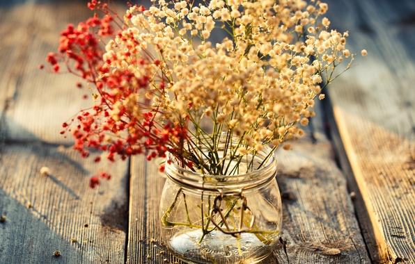 Картинка листья, цветы, фон, widescreen, обои, растения, ваза, wallpaper, цветочки, широкоформатные, background, полноэкранные, HD wallpapers, цветочек, …