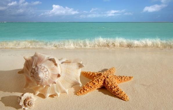 Картинка песок, море, волны, пляж, лето, небо, вода, облака, природа, океан, берег, звезда, красота, раковина, горизонт, …