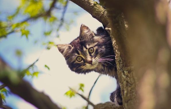 Фото обои кот, дерево, кошак, котяра