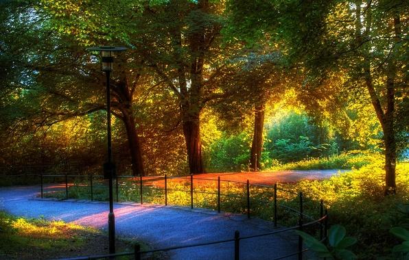 Картинка природа, парк, хорошо