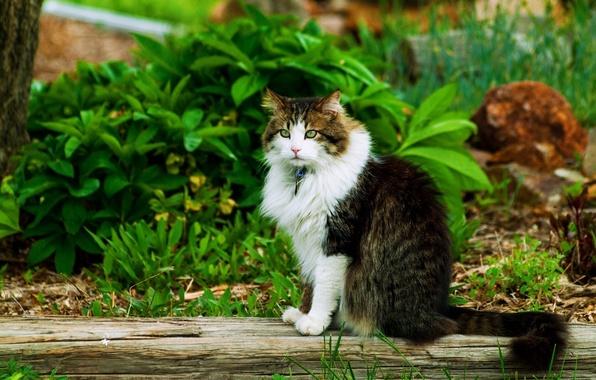 Картинка зелень, кошка, лето, кот, сидит