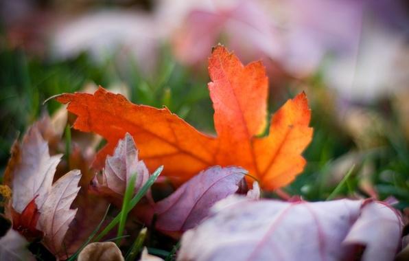 Картинка осень, трава, цвета, макро, природа, фото, фон, обои, яркие, размытость, листики, боке