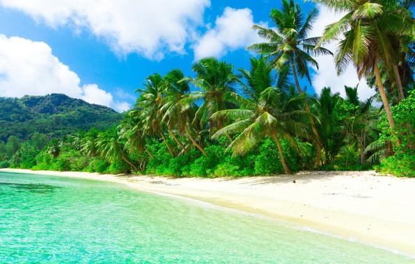 Картинка песок, море, пляж, солнце, тропики, пальмы, океан, берег, остров, summer, beach, sea, ocean, coast, blue, …