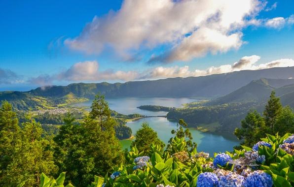 Картинка облака, цветы, озеро, панорама, кратер, Португалия, гортензия, Portugal, Азорские острова, Azores, Lagoon of the Seven …