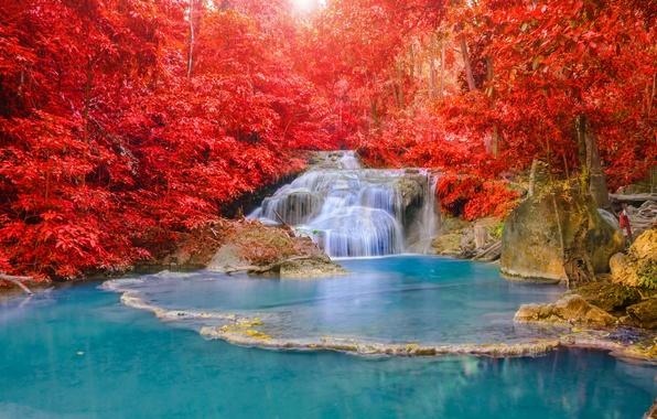 Картинка осень, лес, вода, свет, природа, река, водопад, красиво, каскады