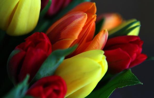 Картинка листья, букет, весна, лепестки, тюльпаны