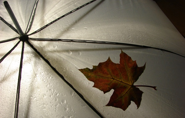 Картинка лист, зонтик, дождь, погода, rain, разное, leav