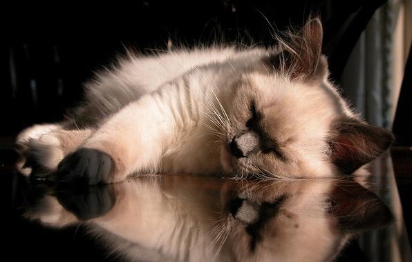 Картинка отражение, кошак, relax