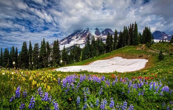 Картинка небо, трава, облака, пейзаж, цветы, горы, природа, весна