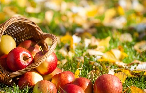 Картинка трава, листья, корзина, яблоки, фрукты