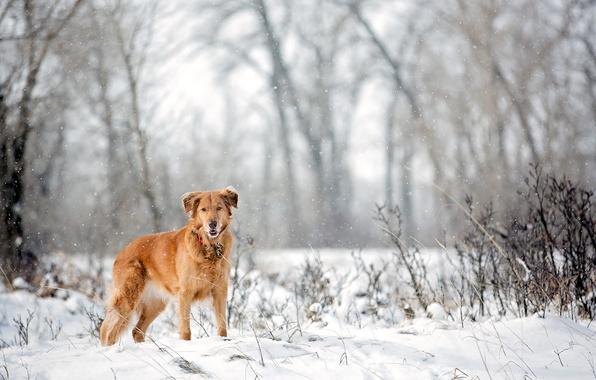 Картинка взгляд, снег, друг, собака