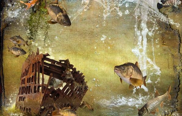Обои картинки фото корабль рыбы фон