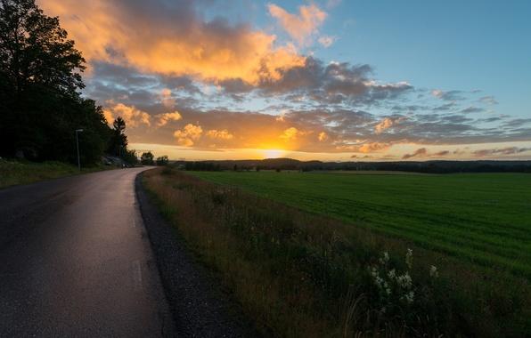 Картинка дорога, зелень, небо, трава, солнце, облака, лучи, деревья, пейзаж, закат, цветы, природа, фон, дерево, widescreen, …