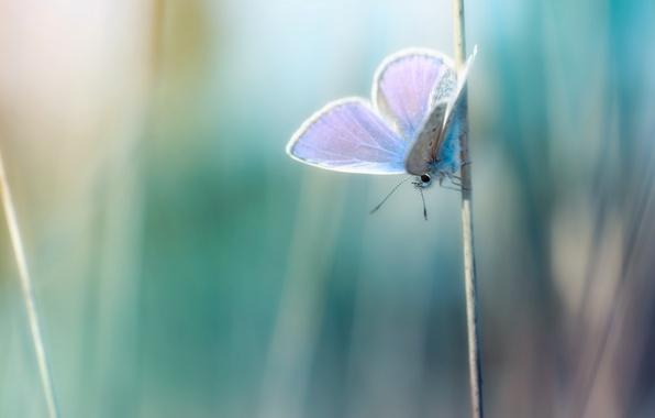 Картинка макро, фото, фон, обои, бабочка, растения, травинка, wallpapers