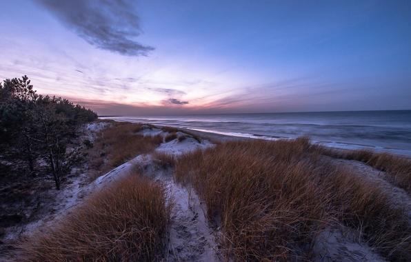Картинка зима, море, пляж, трава, снег, сосны