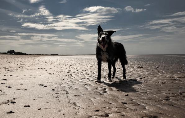 Картинка пляж, взгляд, друг, собака
