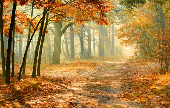 Картинка осень, лес, листопад, солнечный свет