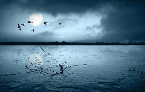 Картинка грусть, птицы, луна, ветка, 149