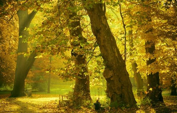 Картинка лето, свет, деревья, парк, скамья