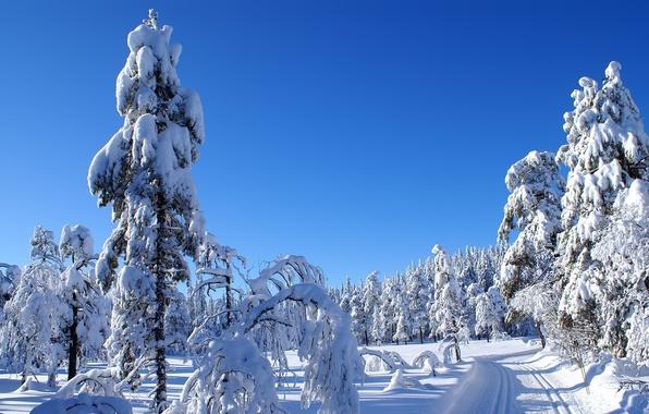 Картинка холод, зима, дорога, небо, снег, пейзаж, природа, ели