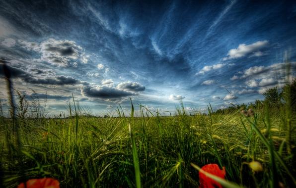 Картинка поле, трава, макро, цветы, природа, пейзажи, поля, маки