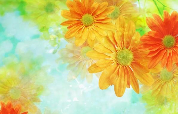 Картинка цветы, фон, обои, светлый