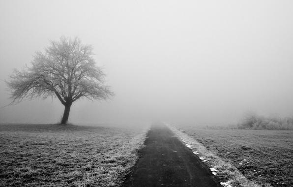 Картинка зима, дорога, снег, деревья, природа, туман
