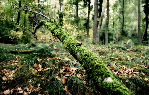Картинка лес, трава, мох, ветка