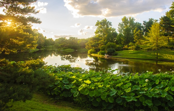 Картинка зелень, небо, трава, солнце, облака, деревья, пруд, парк, США, кусты, Missouri Botanical Garden